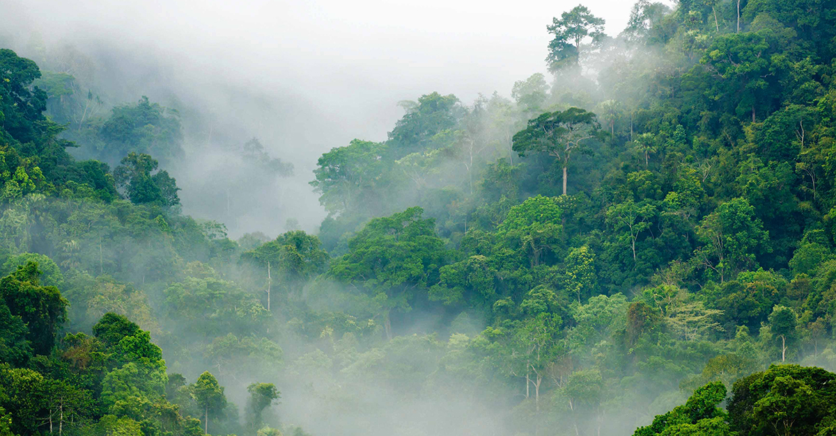 Forest protection project Madre de Dios in Peru